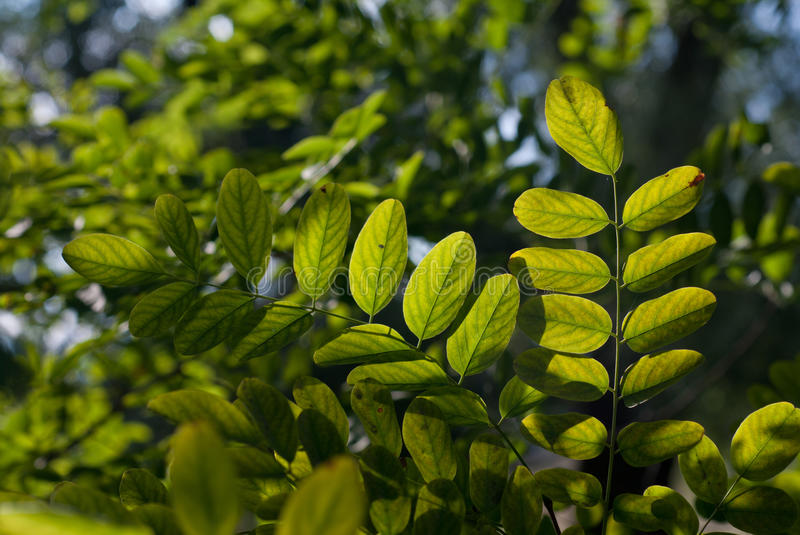 Download Leaves in backlight stock photo. Image of decoration - 26465638