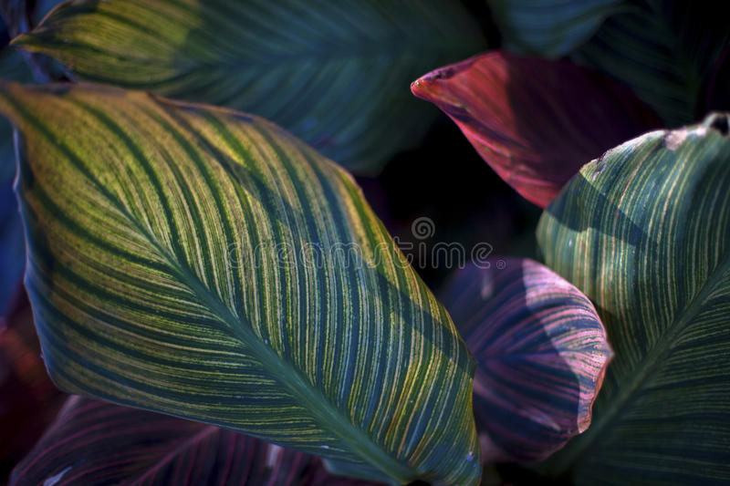 Leaves. Beautiful multicolor leaves on a bright sunny day royalty free stock photos