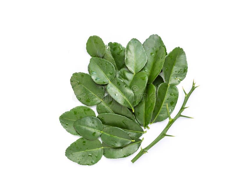 Leaves of Bergamot tree or kaffir lime leaves isolated on white stock photos