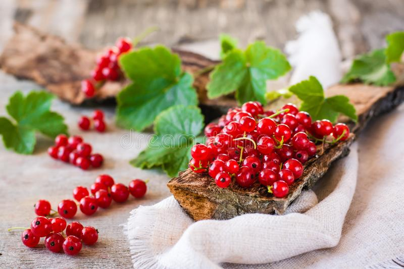 The leaves and berries of red currant on piece of old wood stock image