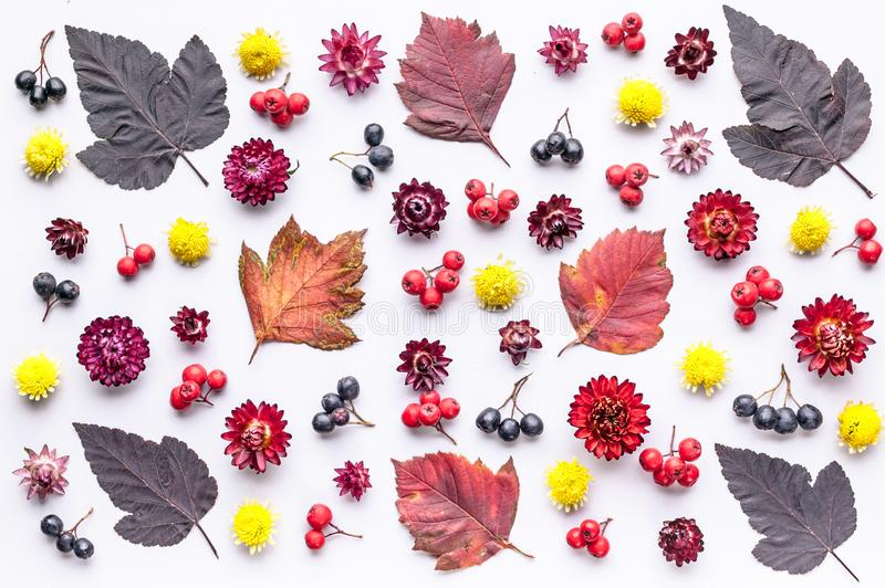 Leaves and berries top view. Autumn composition. Orange and red foliage and small fruits on white background. Fallen leaf and. Rowanbery flat lay. Fall season stock photos