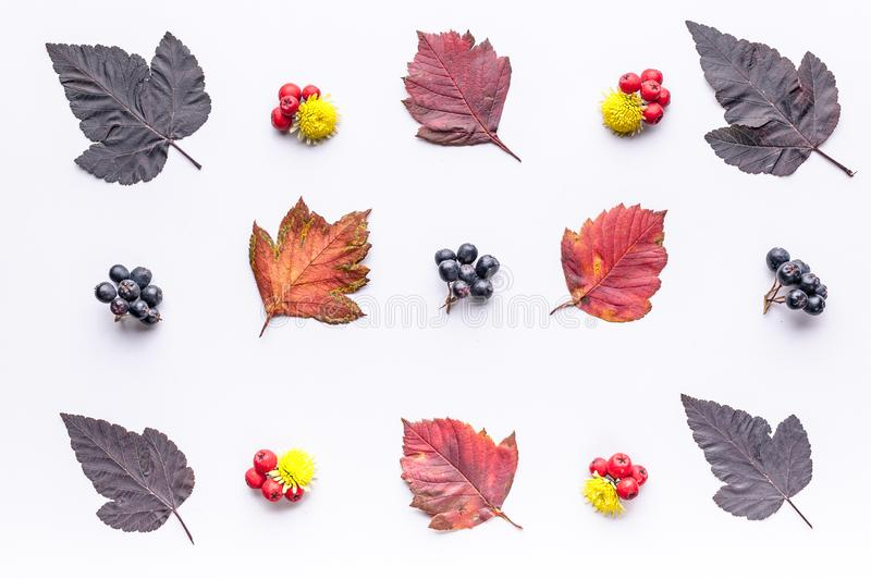 Leaves and berries top view. Autumn composition. Orange and red foliage and small fruits on white background. Fallen leaf and. Rowanbery flat lay. Fall season stock image