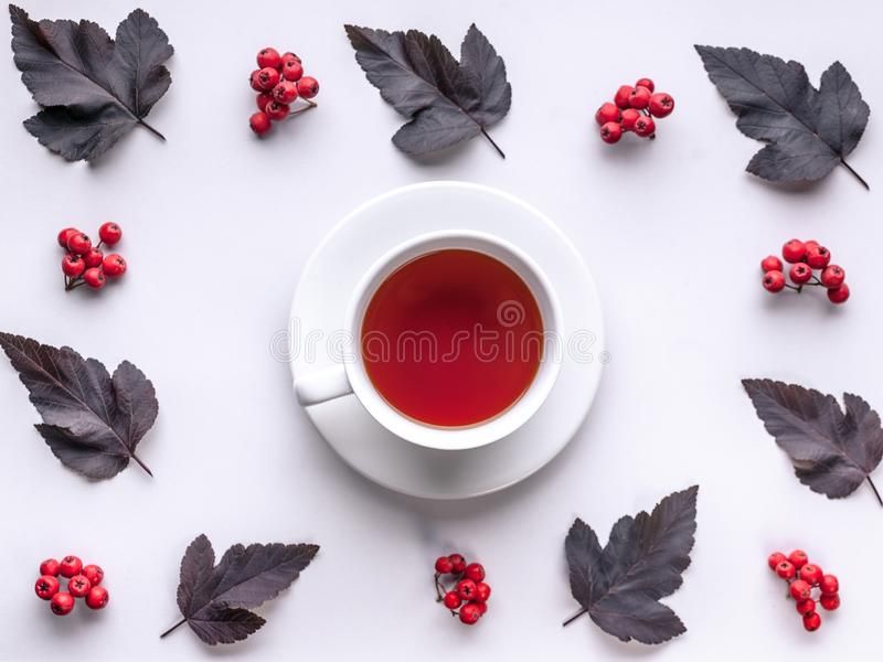 Leaves and berries top view. Autumn composition. Red foliage, ceramic teacup and small fruits on white background. Fallen leaf and. Rowanbery flat lay. Fall stock images