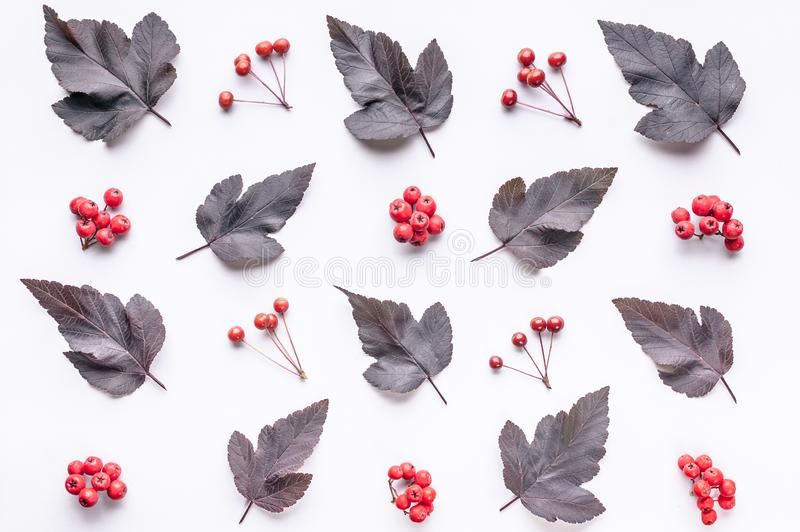 Leaves and berries top view. Autumn composition. Red foliage and small fruits on white background. Fallen leaf and rowanbery flat. Lay. Fall season creative stock photos