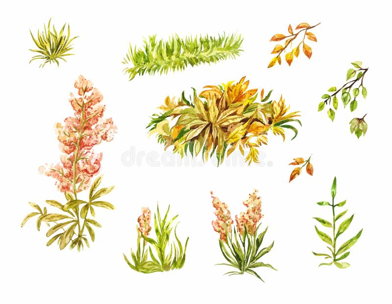 Leaves and blade of grass isolated on white. Autumn elements painted by hand in watercolor. Sketches of plants for light design. Leaves and blade of grass stock illustration