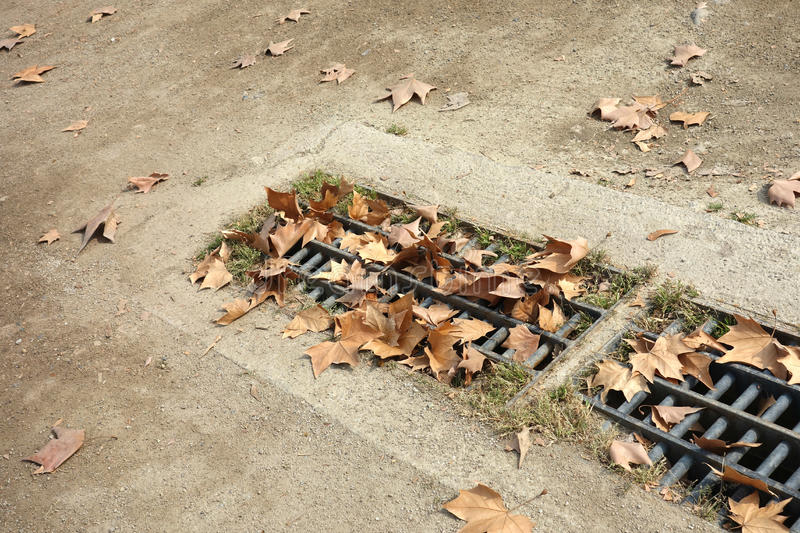 Leaves Blockage. A rain drain stuffed with autumn leaves royalty free stock photos