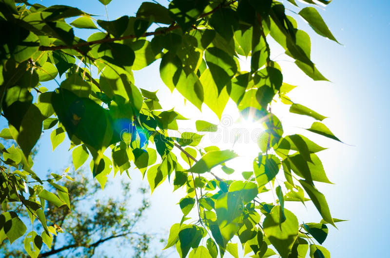 leaves and blue sky with sun royalty free stock images