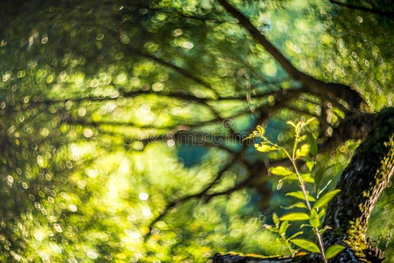 Leaves and bokeh. Green leaves and wonderful lens bokeh royalty free stock image