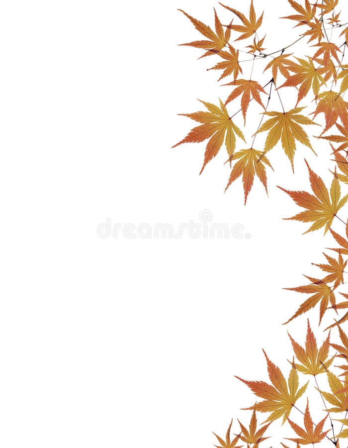 Leaves border isolated on white background stock photos