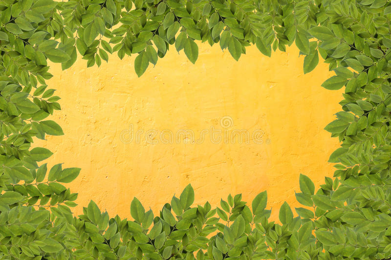 Leaves border on concrete wall. Leaves border on bright orange concrete wall stock photos