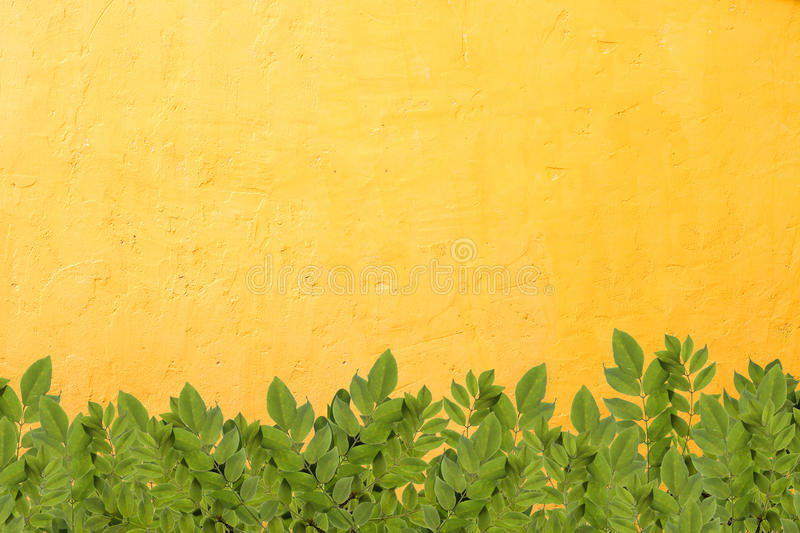 Leaves border on concrete wall. Leaves border on bright orange concrete wall royalty free stock images