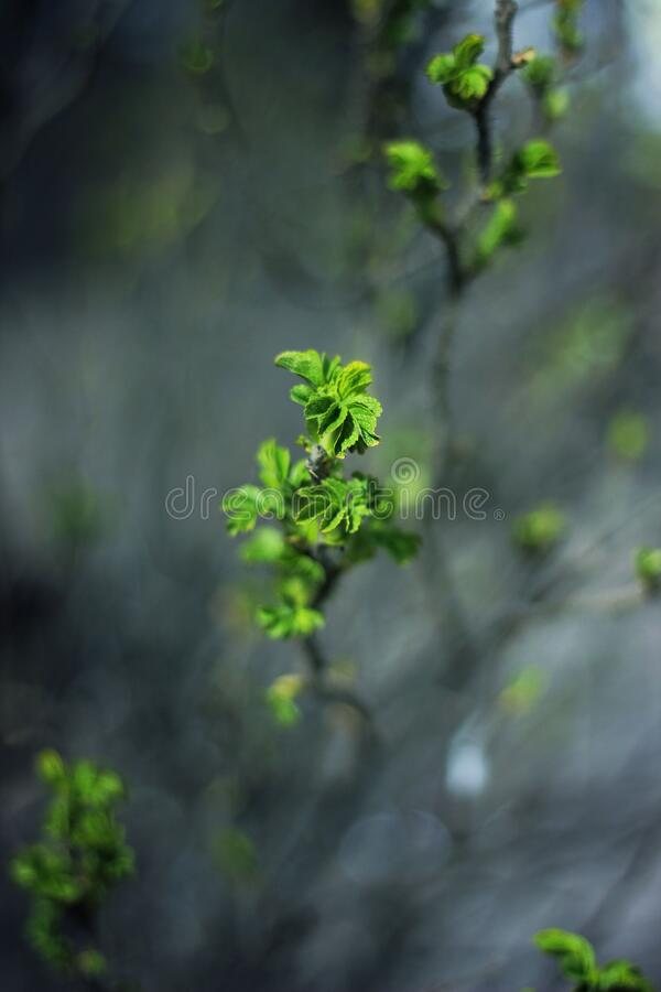 Leaves on branches royalty free stock photography