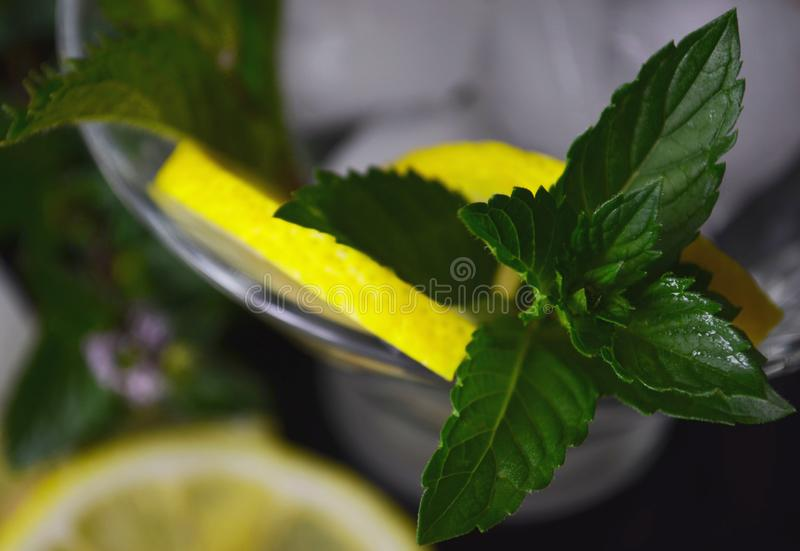 Leaves and branches of fresh green wild mint stock photos