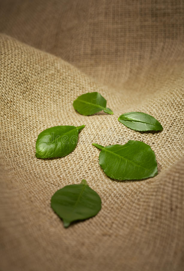 Leaves On Burlap Royalty Free Stock Image