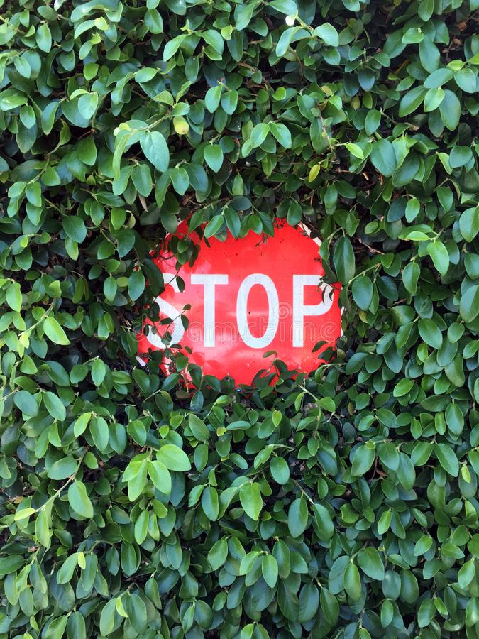 Stop sign overgrown with leaves stock images