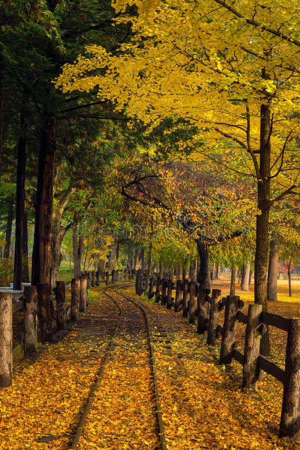 The leaves change color during autumn Nami Island royalty free stock images