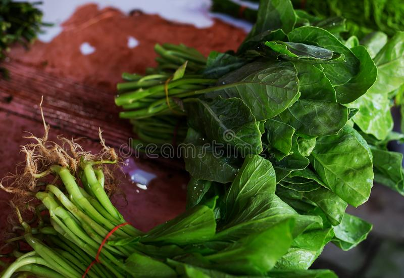 Leaves of Chinese mustard royalty free stock image