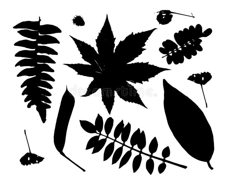 Leaves collection for your design stock illustration