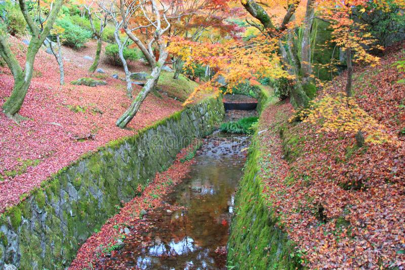 The Leaves color change in tofukuji temple at kyoto in Japan royalty free stock images