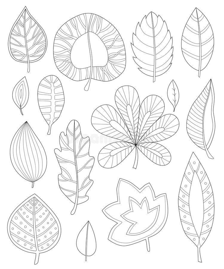 Free Leaves Coloring For Adults Stock Photography - 77010982
