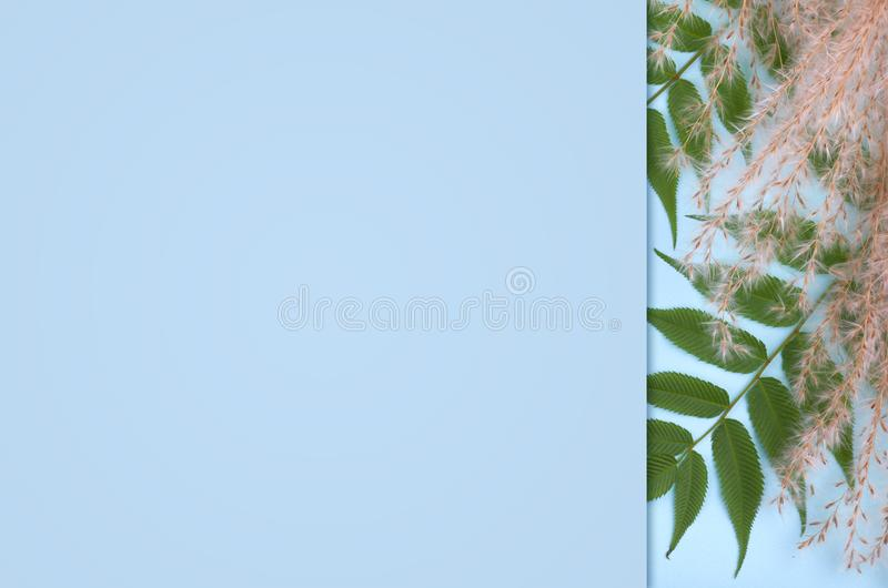 Leaves composition. Nature concept background. Flat lay and top view photo. Copy space template stock photo