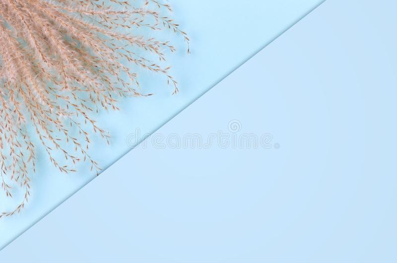 Leaves composition. Nature concept background. Flat lay and top view photo. Copy space template royalty free stock images