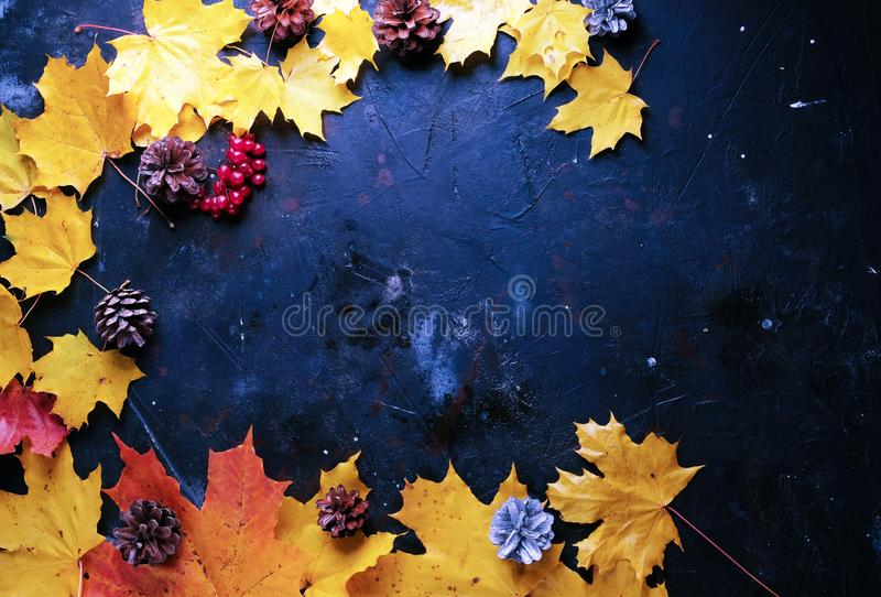 Leaves and cones over a rustic wood autumn background royalty free stock photo