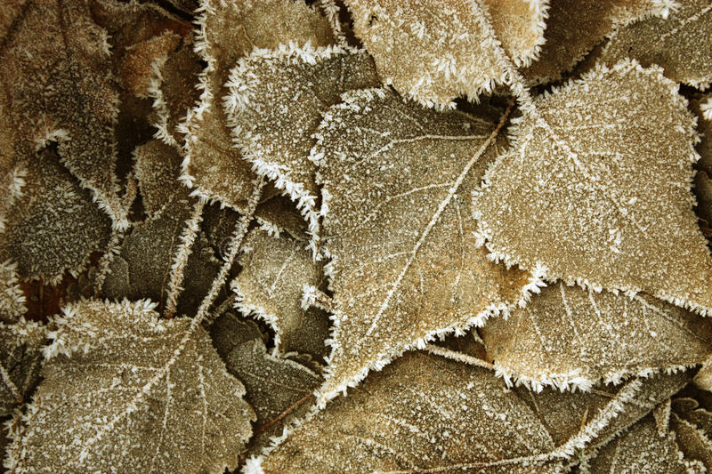 Leaves Covered With Hoarfrost Royalty Free Stock Photos