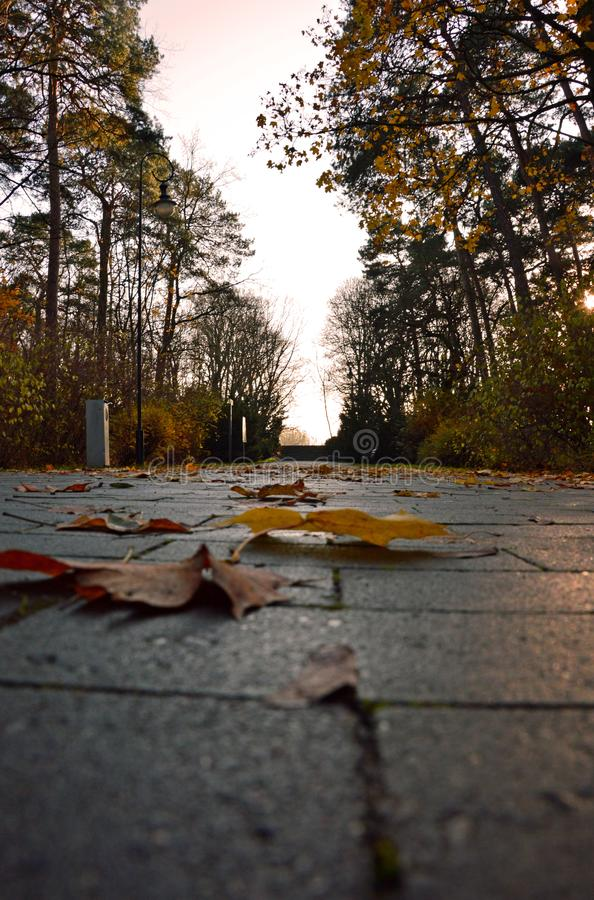 Leaves on the cubes path in a park - worm`s eye view royalty free stock image