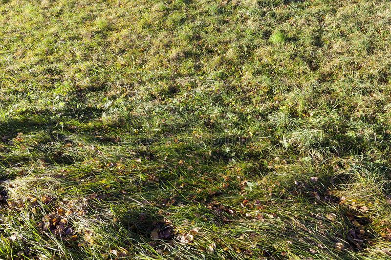 Green grass. Leaves of deciduous trees of different species on a background of green grass, closeup photo in autumn royalty free stock photography