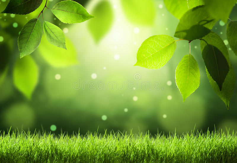 Download Leaves In Deep Forest Stock Photography - Image: 32057172