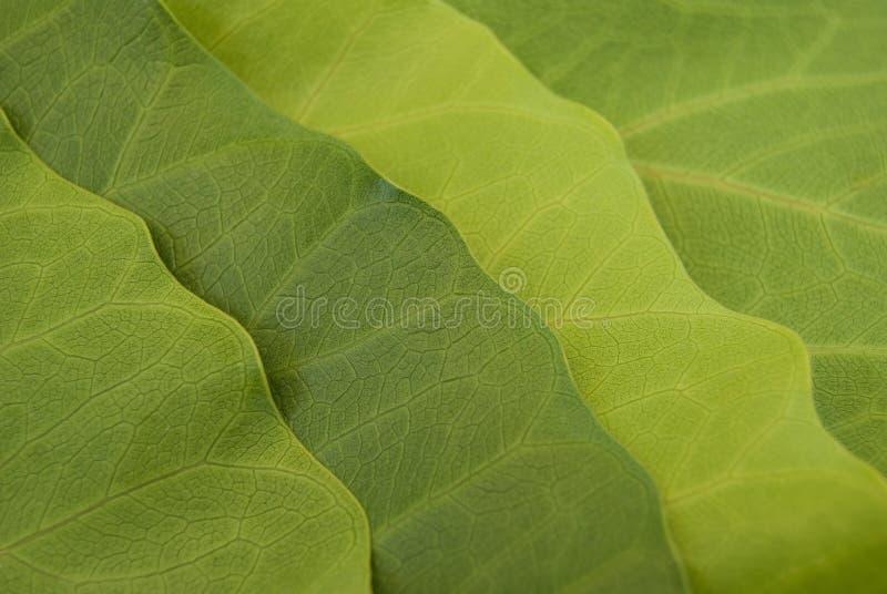 Leaves detail stock image