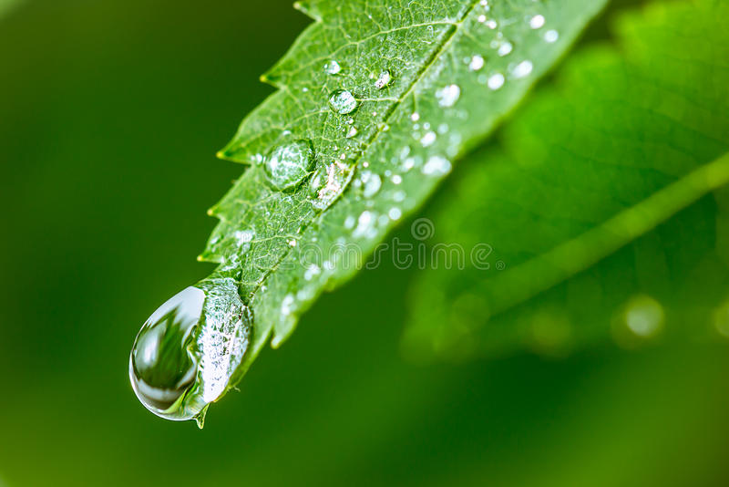 Leaves with drops of water stock photography