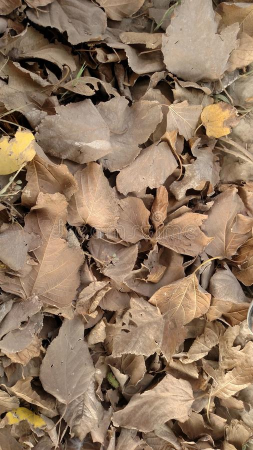 Leaves. Dry Brown Leaves Random Click Wallpapers stock image