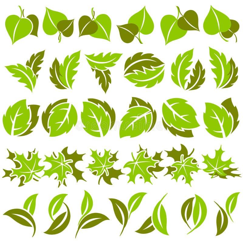 Leaves. Elements for design. vector illustration