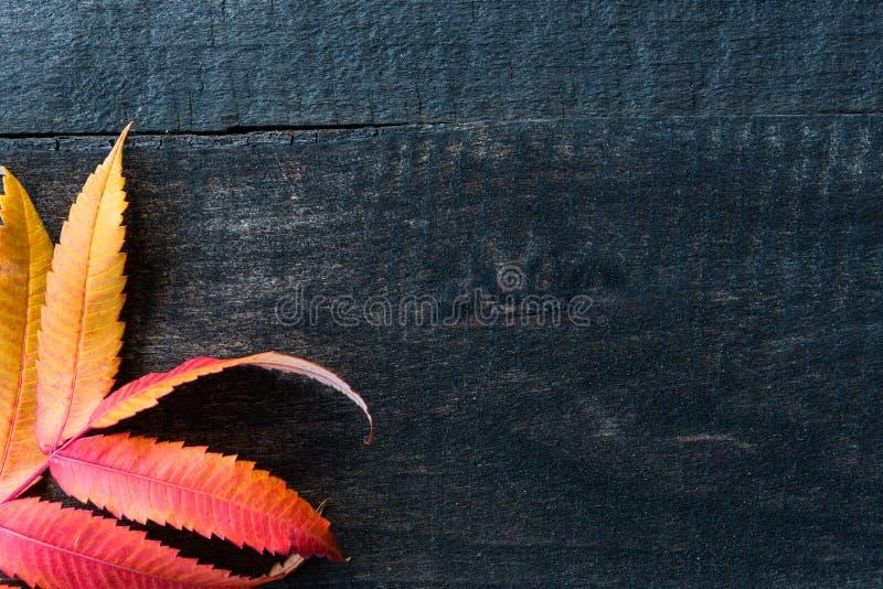 leaves för höstbakgrundskopia över träavstånd arkivfoton