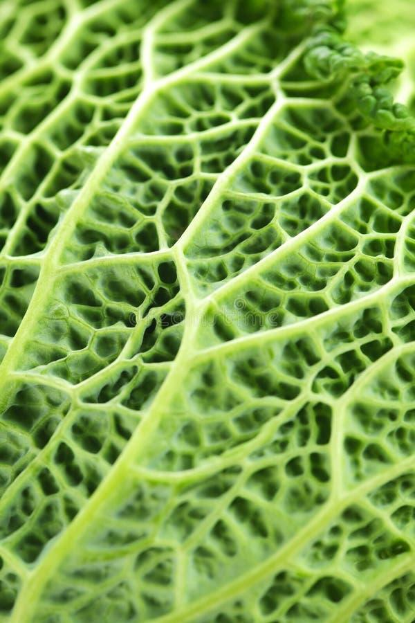 leaves för kålcloseupgreen arkivbild