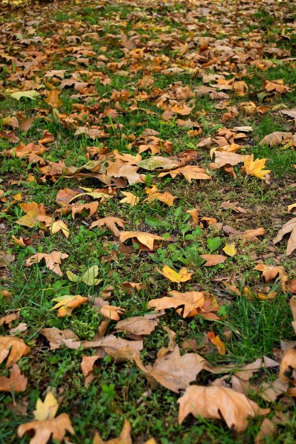 leaves för leafs för höstbakgrund färgrika torra fotografering för bildbyråer