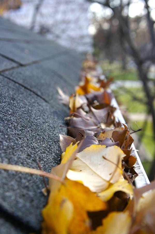 leaves för rengöringsfallavloppsränna fotografering för bildbyråer