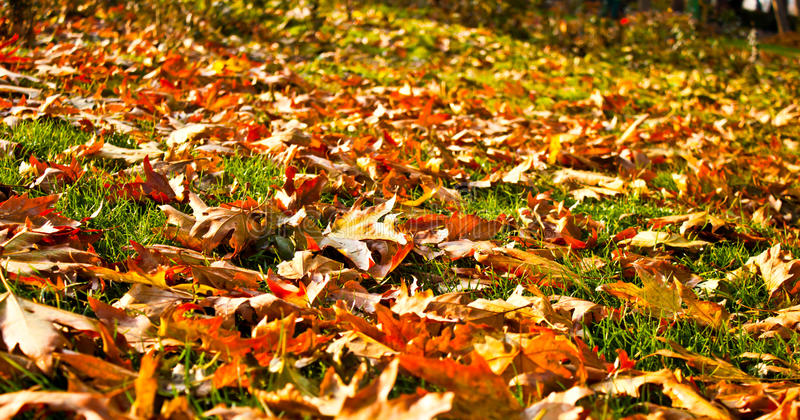 Download Leaves in fall stock photo. Image of close, background - 22177836
