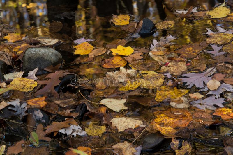 Blanket of autumn colors. Leaves fall to blanket the ground in a final display of simple beauty stock photography