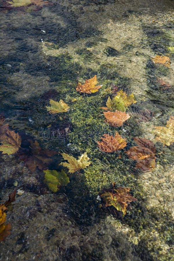 Autumn leaves fall in the water stock image