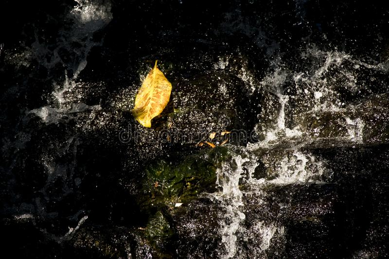 Leaves falling on the waterfall. Incidentally, leaves falling on the waterfall. love this time royalty free stock photo