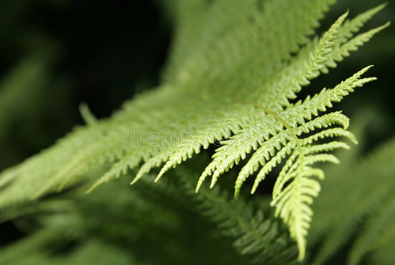 Leaves of fern stock photos