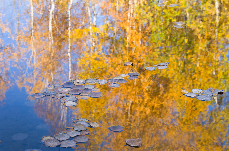 Leaves float on water. stock photos