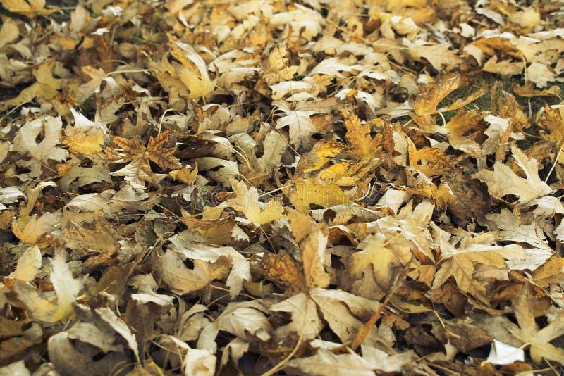Leaves on the floor in autumn stock photos