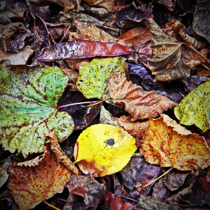 Leaves on the floor royalty free stock image