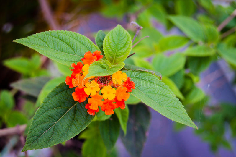 Leaves and Flower stock photography