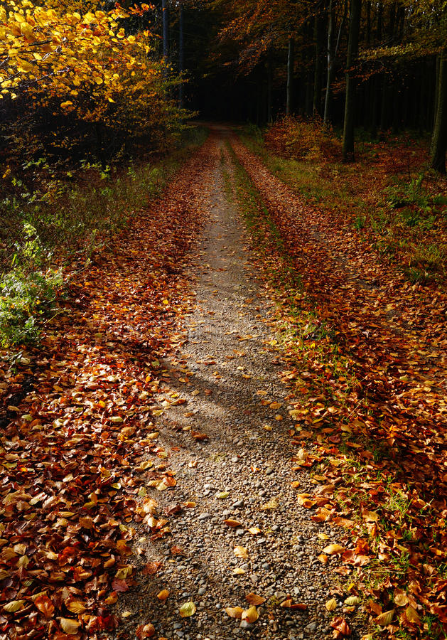 Download Leaves On A Forest Path Royalty Free Stock Image - Image: 33335786