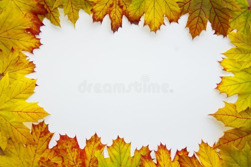 Leaves frame. Many leaves on a white background make a frame stock image